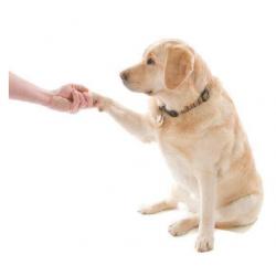 20 Trucos para perros