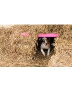 Barn Hunt - Competición en búsqueda de ratas